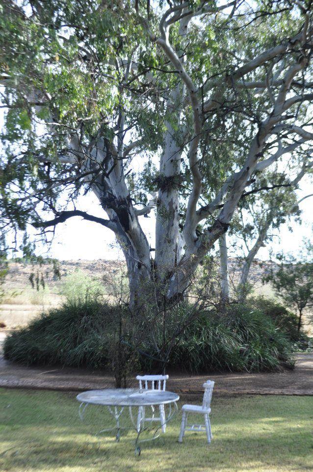 Get Married under our stunning Blue Gum Tree :)