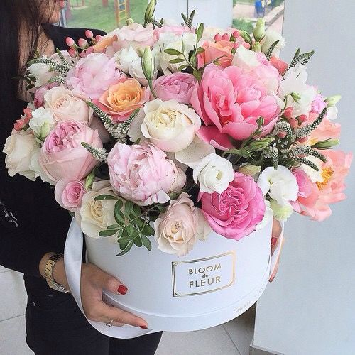 Blushed Darling Andrea Burtea Fiori Flowers Flower