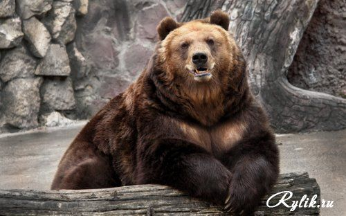 Сборник фотографий животных - лиса, медведь, лошадь, кенгуру, олень, утята, попугай