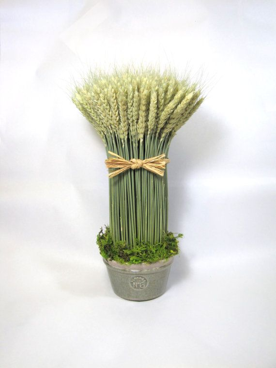 Wheat Sheaf $42.00  dried floral  #Dried_Flowers  #Wheat_sheaf