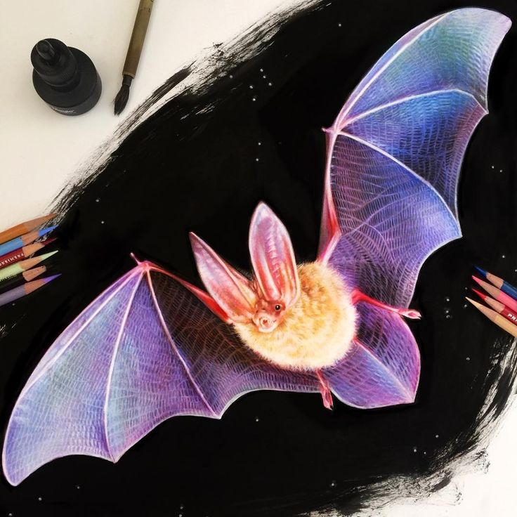 Bat. Eclectic Collection of Realistic Drawings. By Morgan Davidson.