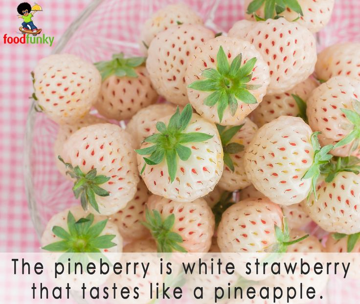 facts pinterest pineberry ile ilgili görsel sonucu