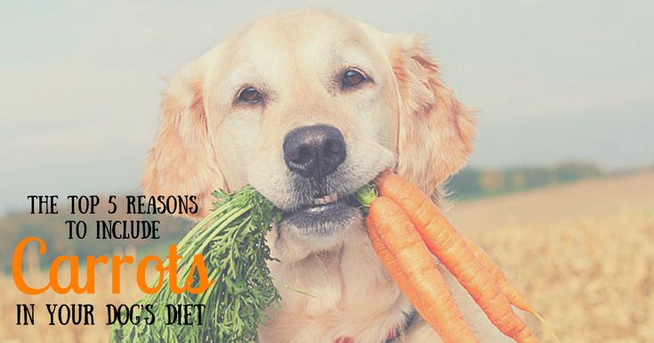 Imagine...you had a busy month and forgot to order a replacement case of Redbarn natural bully sticks. Your dog is nosing around and looking for a treat, but you're fresh out. You open up your fridge to see if there's any people-food you can give him when your eyes spot the bag of baby carrots i…