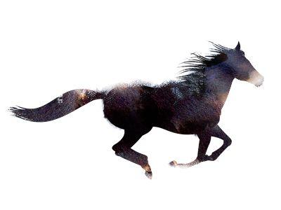 Inky horse illustration