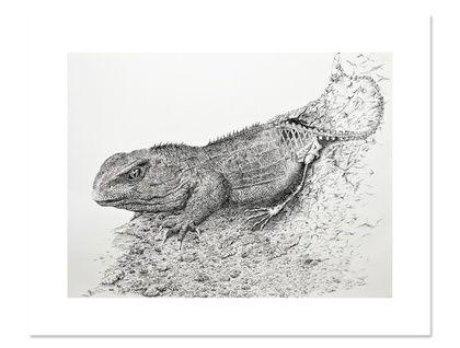 Tuatara drawing archival print