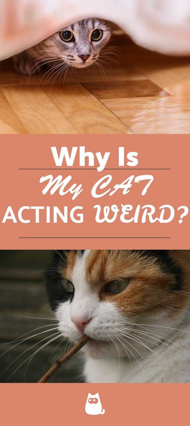 Reasons Your Cat Acts Weird In 2020 Weird Cats Sleeping Kitten