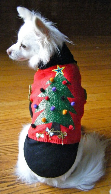 "Ugly Christmas sweater/vest. Done forget to include your pets in your ugly Christmas party Needing ideas for a FUN Ugly Christmas Sweater Party check out ""The How to Party In An Ugly Christmas Sweater"" at Amazon.com"