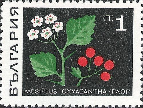 ◇ Bulgaria 1969
