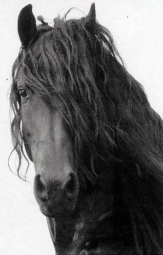 #horseriding #horserider #equine Friesen – #Equine #Friesen