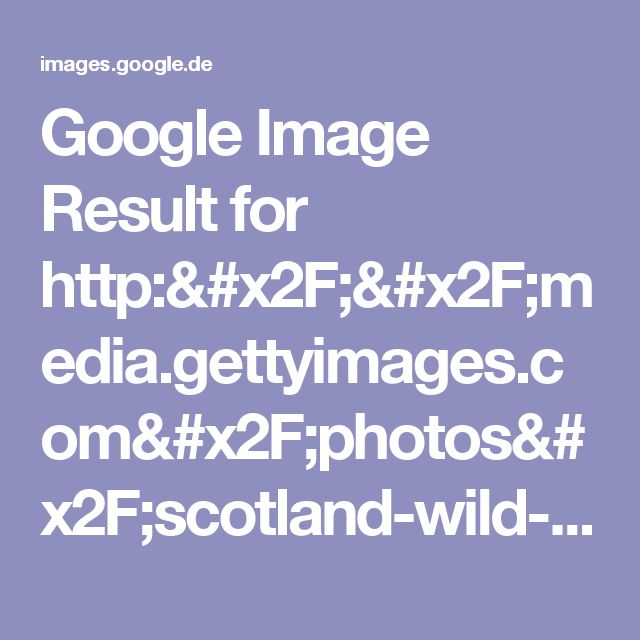 Google Image Result for http://media.gettyimages.com/photos/scotland-wild-stag-highland-panorama-picture-id108267646?s=170667a