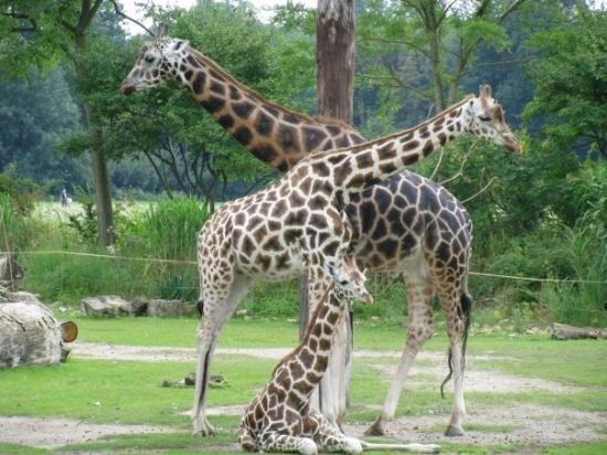 Great Leipzig Zoo Zoologischer Garten Leipzig