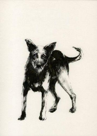 Vecchi cani nelle vie di Milano ecco i ritratti di Giovanna Durì