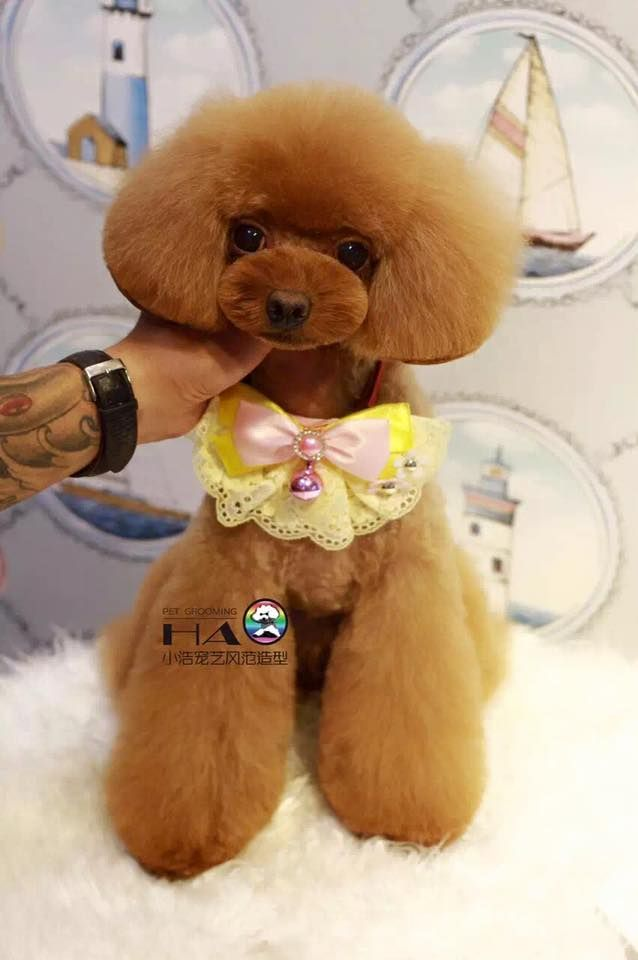 65 Best Dog Grooming Images On Pinterest
