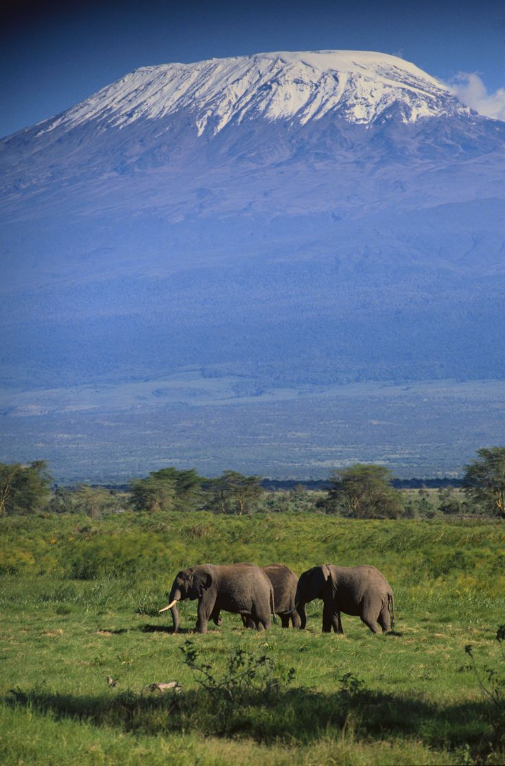 Kilimanjaro Panorama einer Afrika-Safari