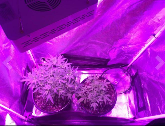 Mars 300W LED Grow Light Full Spectrum Hydro for Indoor Plants Veg Flower L& & 73 best LED grow light for marijuana growing images on Pinterest ...