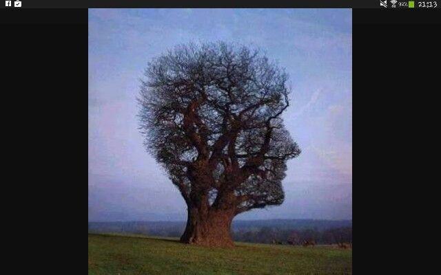 Ağacın güzelliği