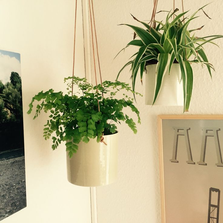 Anne Black Grow flowet pots (artichoke + white)