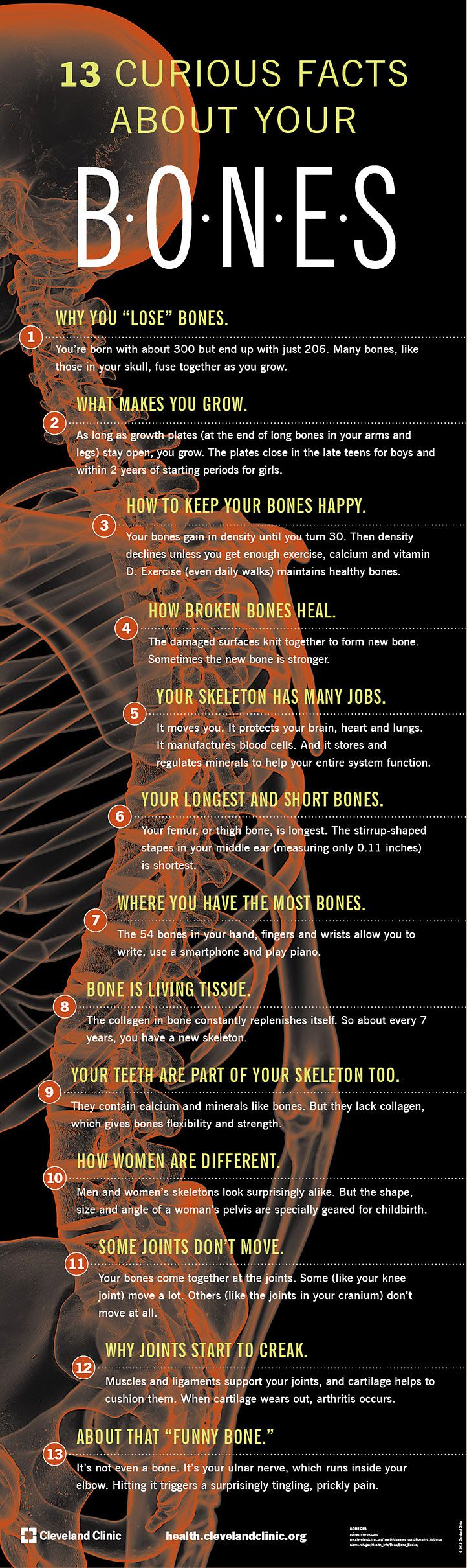 Orange county ca s premier non surgical spinal decompression clinic - 13 Curious Facts About Your Bones