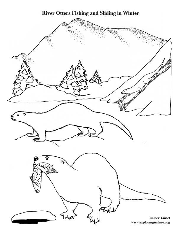 Learn About Animals On Exploringnature Org Coloring Pages River