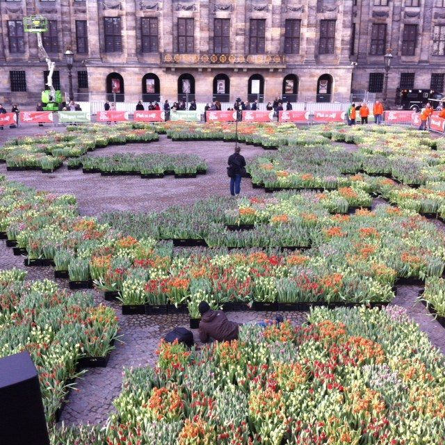 #Tulpenplukdag in Amsterdam Everybody can harvest 20 tulips for free. Every year on saturday in January on the #Damsquare in Amsterdam-Centre. In the background you can see the Royal Palace