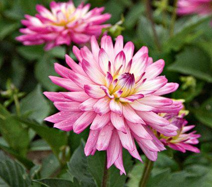 17 best bloemen planten flowers plants images on. Black Bedroom Furniture Sets. Home Design Ideas