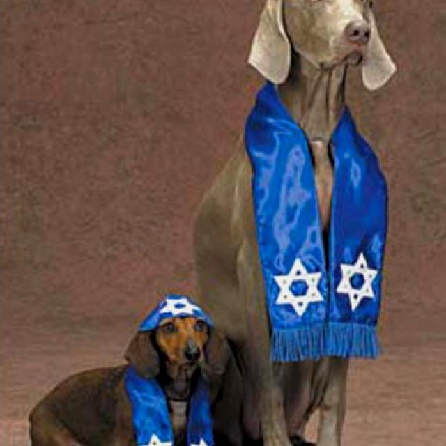 Pup Shalom