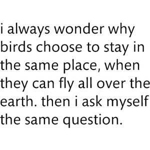 I always wonder why birds choose to stay in the same place, when they can fly all over the earth. then i ask myself the same question.