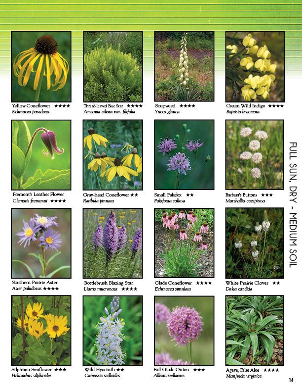 43 Best My Own Garden Images On Pinterest Container
