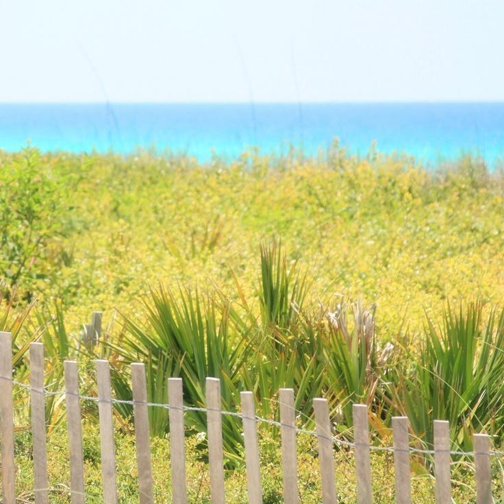 seaside, floridaGardens Fence, Beachy Keen, Erin Anderson, Seaside Florida, Erin Art, Beach Vacas, Nice Gardens, Gardens Wonder, Garden Fences