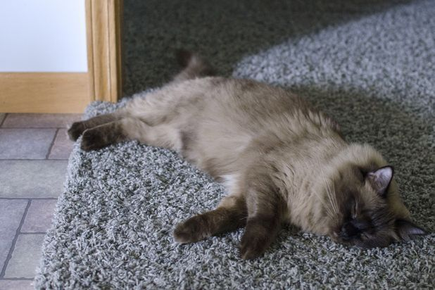 Natural Remedies For Sick Cats