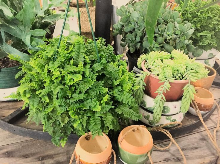 Lots of beautiful and unusual plants in store...open today 10am to 4pm  #plants #plantlife #naturelovers #nature #niceshop #huntervalley #twigandmoss