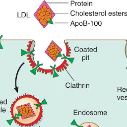 Image: The LDL receptor pathway & regulation of cholesterol metabolism.…