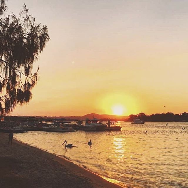 """Chillin watching the pellies catch fish at sunset yesty 🐟🌅👌🏼 #noosaville #sunset #pelican #fishing #socool #pretty #sundown #orange #gold #sky #skyporn #explore #discover #queensland #qld #noosa #noosaheads #noosariver #walking #chillout #holiday #travel #travelgram #instagood #instatravel #wanderlust"" by @esq.23. #fslc #followshoutoutlikecomment #TagsForLikesFSLC #TagsForLikesApp #follow #shoutout #followme #comment #TagsForLikes #f4f #s4s #l4l #c4c #followback #shoutoutback #likeback…"