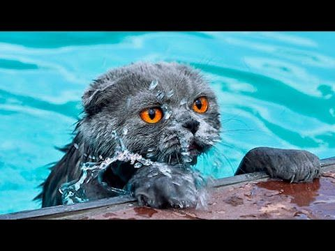 Official Video: Cat Bath Freak Out -Tigger the cat says 'NO!' to bath - YouTube