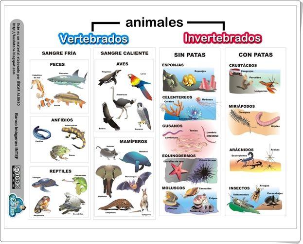 Dibujos Para Colorear De Animales Invertebrados Y Vertebrados: Dibujos De Animales Vertebrados E Invertebrados Infantiles