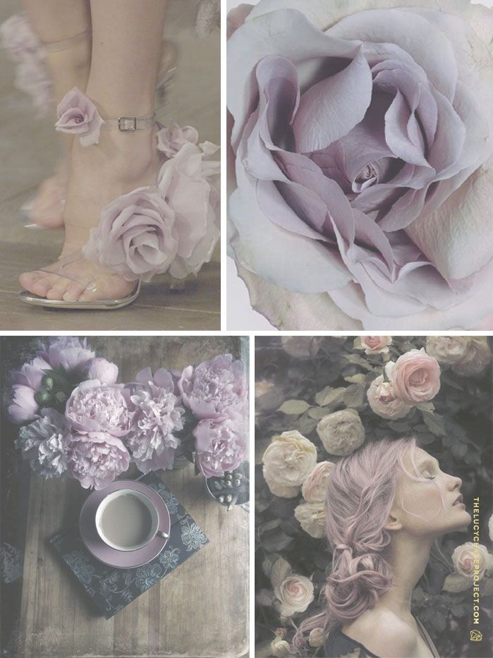THE LUCY CHASE PROJECT // Rose