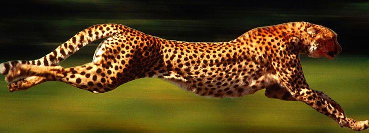 yirtici-hayvanlar.jpg (1596×577)