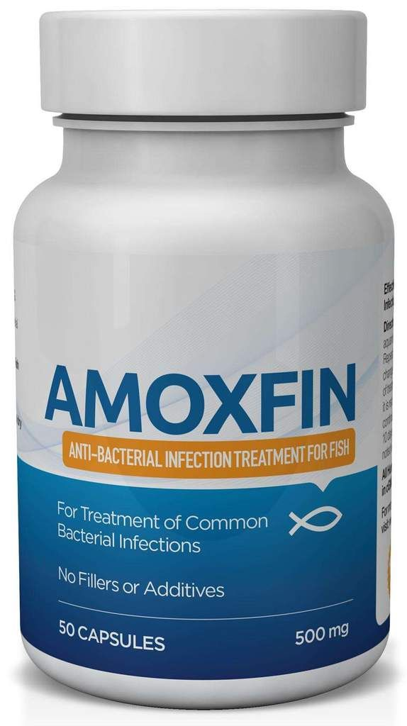 Amoxfin 500 Mg 50 Count Fish Antibiotics Emergency Prepping