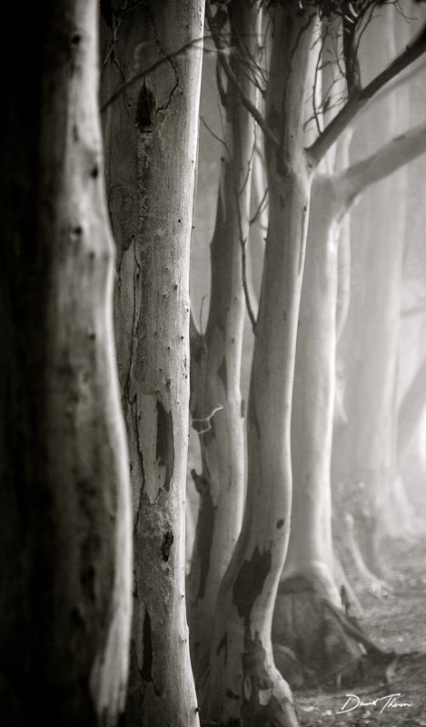 Photograph Gumtrees by Dawid Theron on 500px