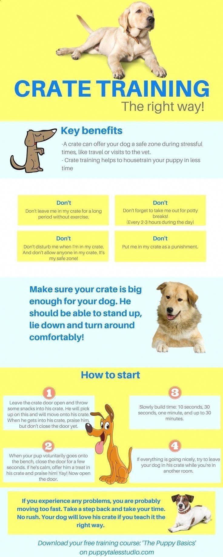 Pet Training Dog Training 101 Crate Training Click Pin