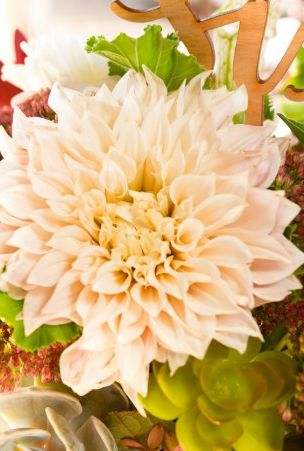 Beautiful shot of the Cafe au lait Dahlias used for this Wedding Rehearsal Dinner at The Shooting Club - The Omni Homestead Resort. Photo courtesy of  J&D Photo