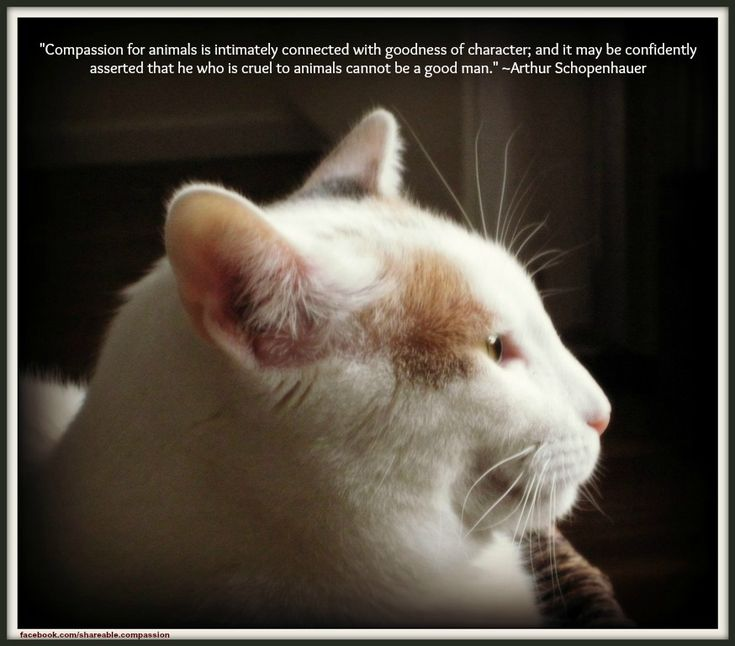 """Compassion for animals is intimately connected with goodness of character; and it may be confidently asserted that he who is cruel to animals cannot be a good man."" ~Arthur Schopenhauer #compassion #quote #cat"