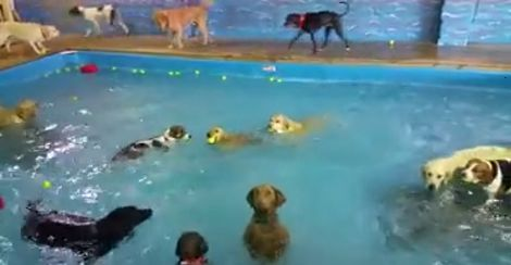 Beya the five-year-old pup is one of the many pups invited to a doggy pool park at Happy Tails Resort, Norfolk. But while all the pups move around and splash in the water excitedly, barking and chasing toys, Beya stays perfectly still and refuses to swim at all. What?! This pup stands up straight in…