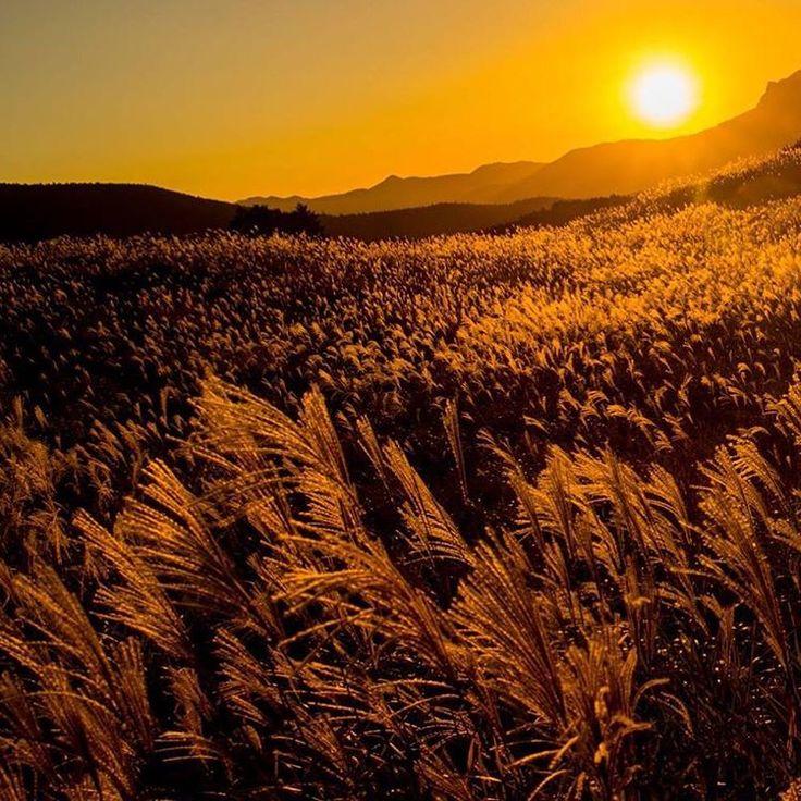 奈良県にある「曽爾高原(そにこうげん)」。奈良県と三重県の県境に位置した国立公園で、秋になるとススキが一面を埋め尽くす癒しスポットです。
