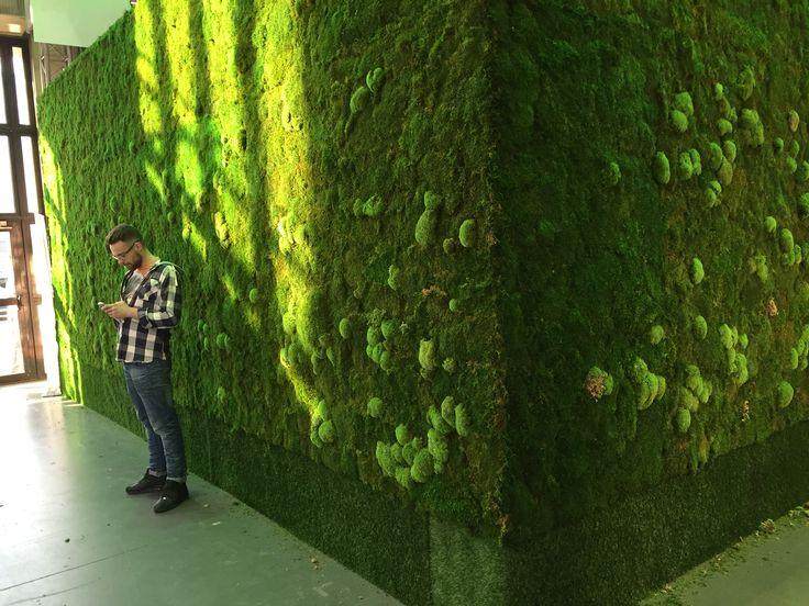 Zielona ściana z mchu stabilizowanego targi Gardenia w Poznaniu 2016