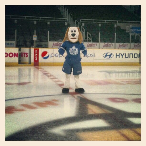 Duke the Dog before the game at centre ice at the Dunkin' Donuts Center.