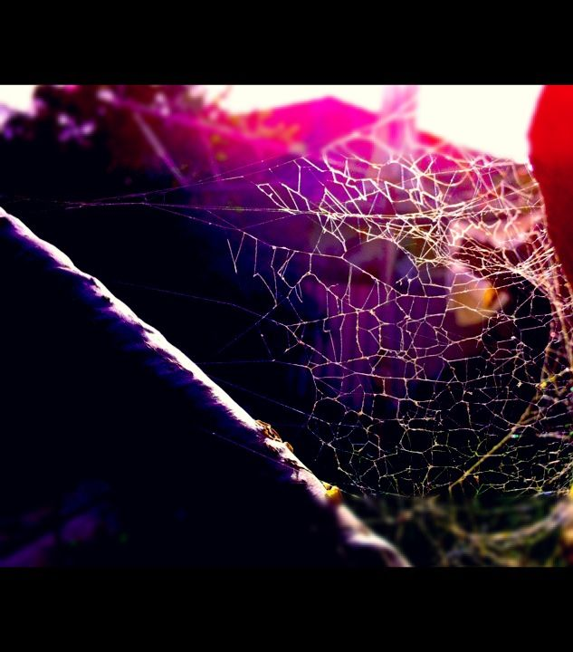 Get caught in my web