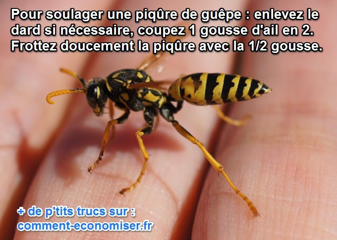 Soulager Piqure De Guepe