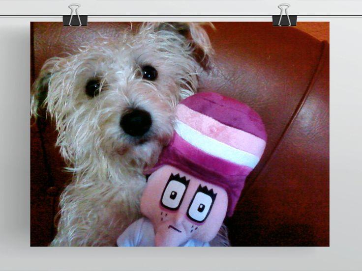 Chico y #Enjuto | #dog #perro #mascota #peludo #Ni140Ni300
