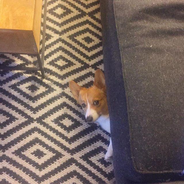 Someone say walk?! 🐶❤🏃 #corgi #corgisofinstagram #corgistagram #corgination #corgicommunity #corgilove #corgipuppy #corgiaddict #puppy #puppiesofinstagram #instapuppy #puppiesxdogs #corgiworld_feature #derp #dogsofinstagram #puppysketch #dog_features #petstagram #dogstagram #コーギー #かわいい #犬 #愛犬 #犬バカ部 #코기 #귀여워 #멍스타그램 #강아지